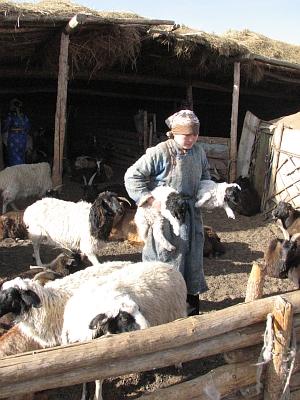 Mongolian shepherdess at work (Alexander 06)