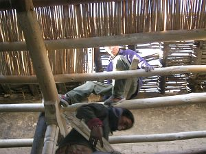 Ladakhi artisans building a new ceiling structure for the exhibition room.
